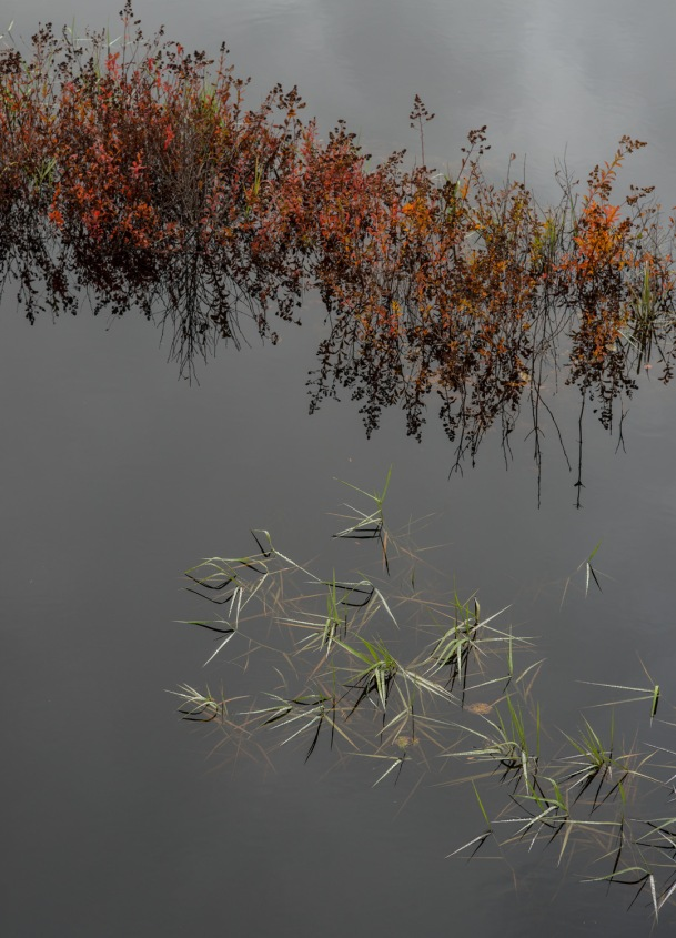 Small Marsh Scene (Nikon D800E, Nikkor 85mmf1.8G)